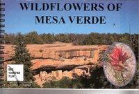Wildflowers of Mesa Verde