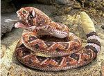 Puppet Rattlesnake